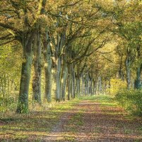 Wald- / Baum-Bestattung